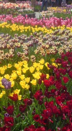 とっとり花の回廊